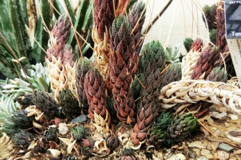 Type of cactus