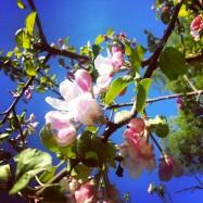 Miss my garden