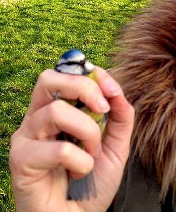 Steph holding a blue tit