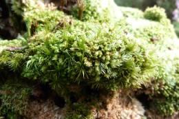 Mosses!