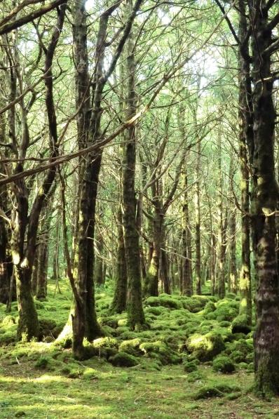 Yew Woodland